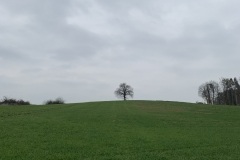 Baum im Grünen den Hügel aufwärts