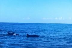 Dolphins und  einen Buckelwal (gesehen nicht fotografiert)