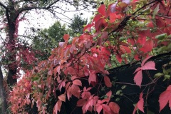 Bunte Blätter in Wien