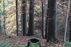 Herbstwald in der Steiermark