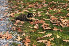 Herbstlaub mit Katze