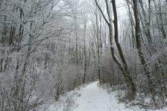 Wiener Wald